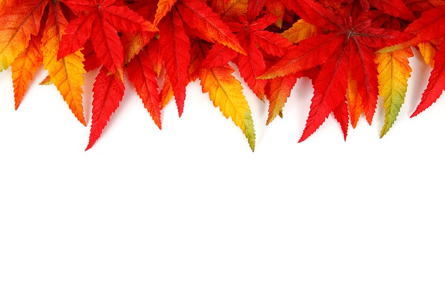 , abstract, autumn, background, bright, frame, color