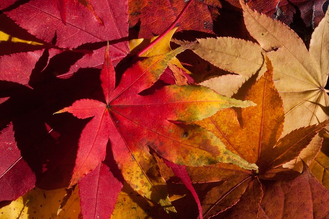 , autumn, fall foliage, golden autumn, leaves