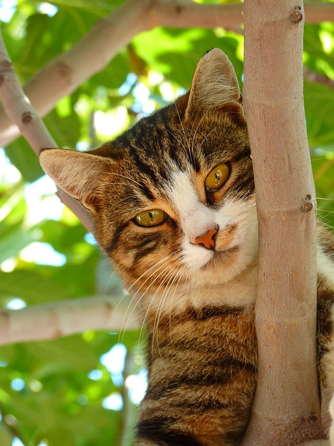 , cat, sweet, climb, tree, animal, dear, playful