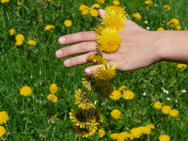, dandelion, dandelion crown, wreath, hand, flower