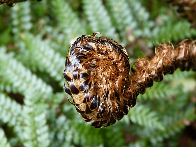 , fern, green, plant, forest, journal, nature, bud