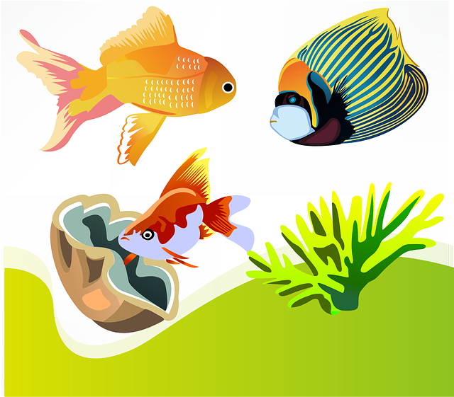, fish, goldfish, marine diversity, ornamental fish
