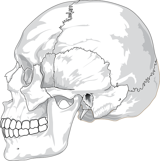 , head, back, top, view, science, diagram, outline