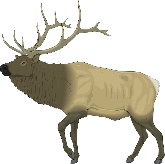 , large, body, moose, animal, mammal, antlers