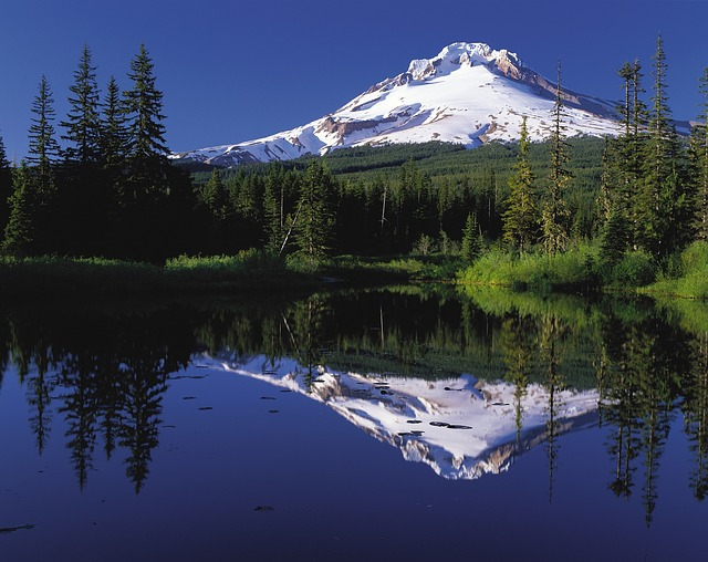 , mount, hood, oregon, scenery, snow, snow caped, forest
