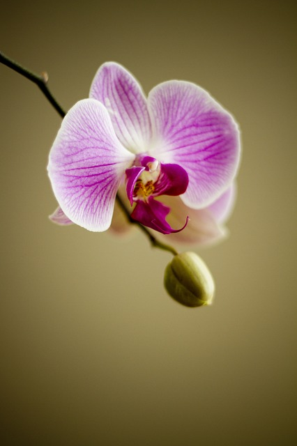 , orchid, flower, flora, florist, plant, lovely, nature