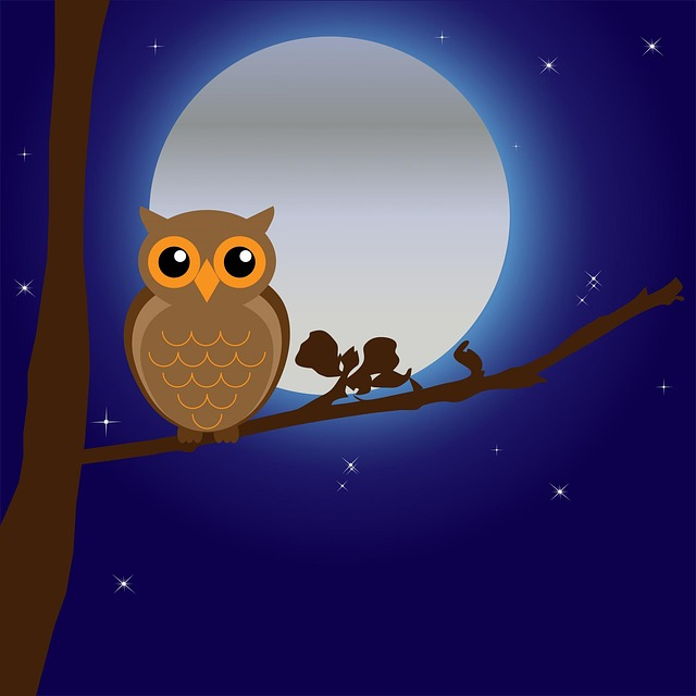, owl, bird, animal, tree, branch, night, moon, moonlight