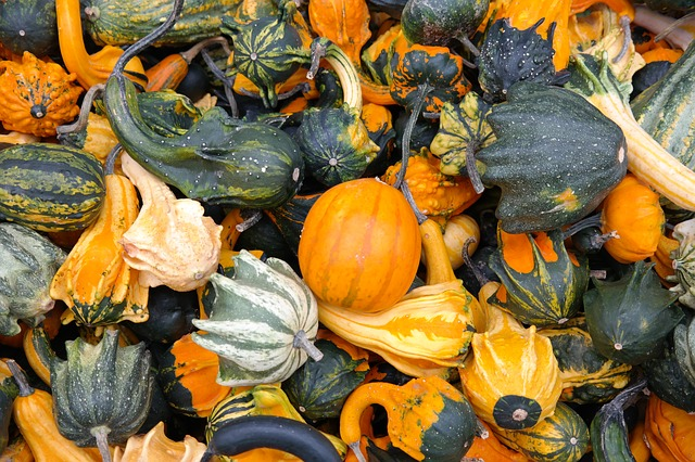 , pumpkins, decorative squashes, green, autumn, orange