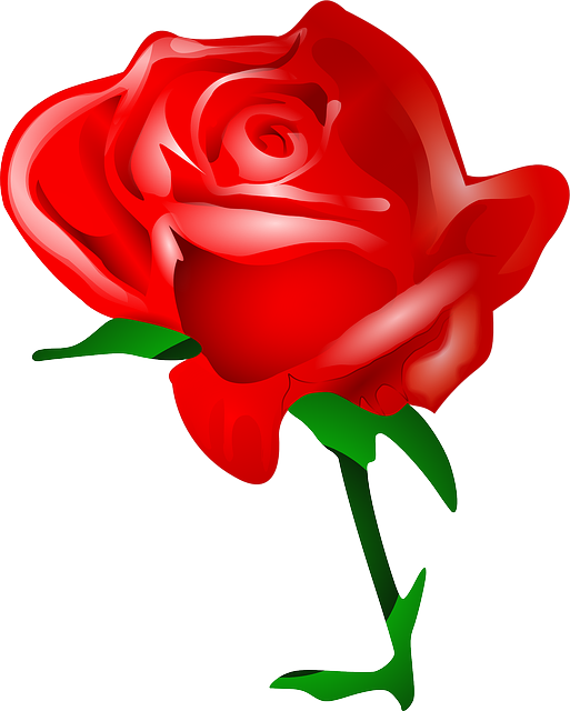 , red, plants, flower, flowers, cartoon, rose, tomas