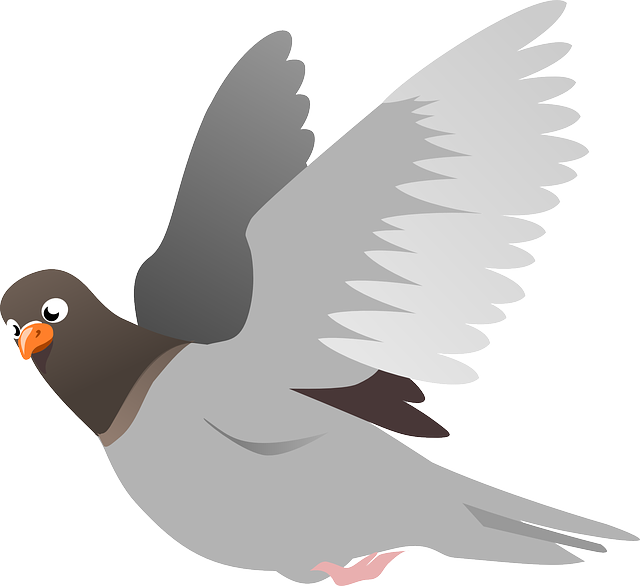 , squab, pigeon, animal, bird, flight, flying, wings