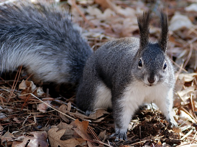 , squirrel, nature, outside, closeup, macro, wildlife