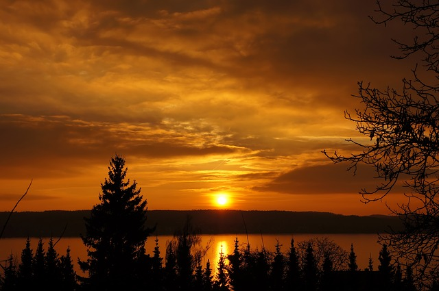 , sunset, orange, sun, sunny, cloud, branches, winter