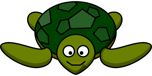, turtle, happy, animal, marine, smile, green