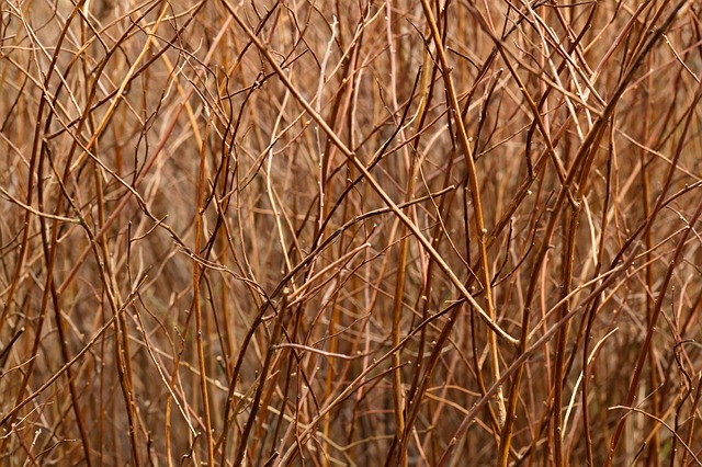 abstract, background, branch, brown, color, flora