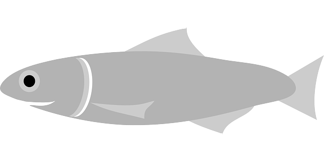 anchovy, fish, grey, swim, sea, food, swimming, animal
