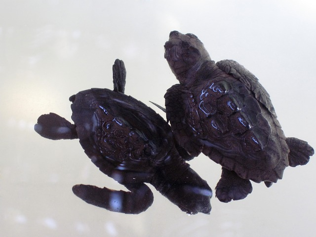 animal, baby, reptile, shell, tortoise, turtle, water