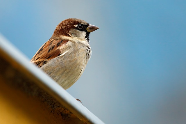 animal, bird, brown, feather, feathers, little, nature