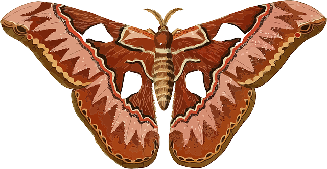 animal, butterfly, insect, moth, nature