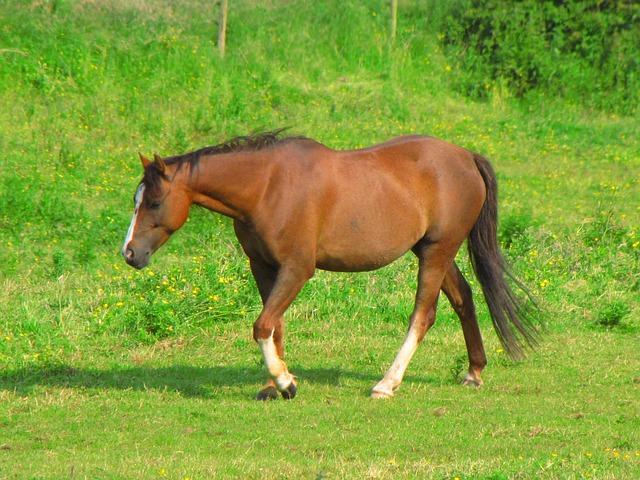 animal, horse, meadow, brown, farm