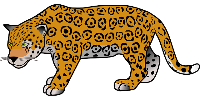 animal, jaguar, dangerous, mammal, safari, wild