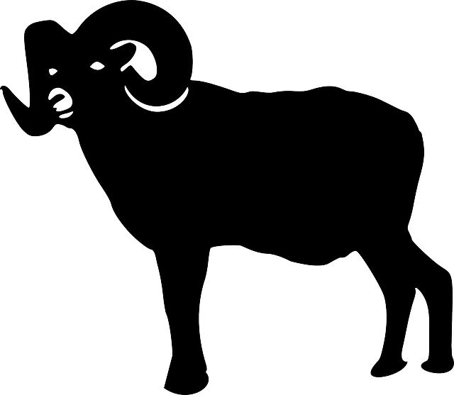 animal, nature, sheep, silhouette