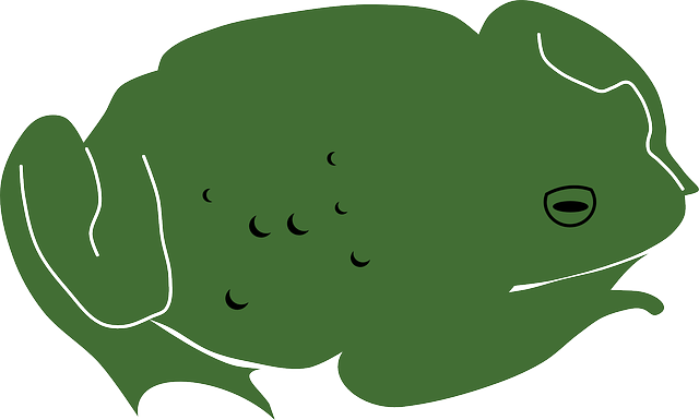 animal, toad, frog, green