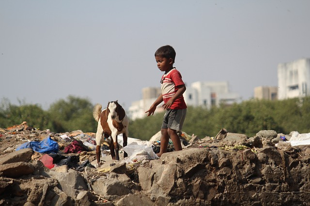 animals, animal, childrens, sky, street, india, goat
