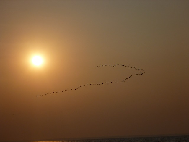 animals, animal, water, bird, birds, sunset, sea, sun