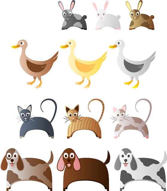 animals, bunny, cat, dog, duck, rabbit