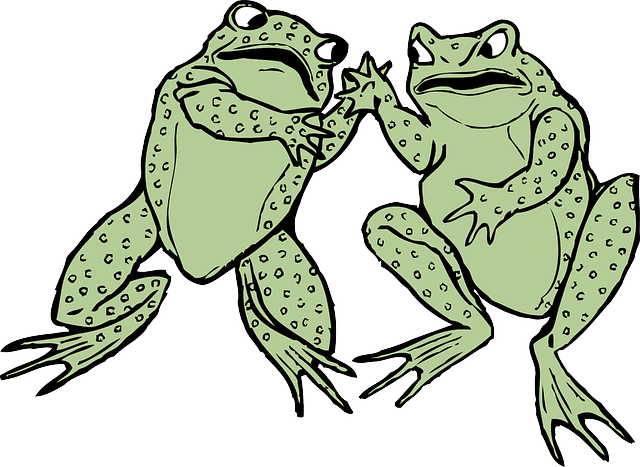 animals, frogs, frog, water, green, two, cartoon