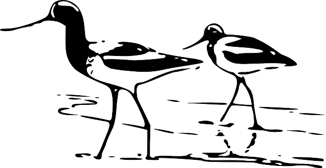 animals, outline, birds, bird, animal