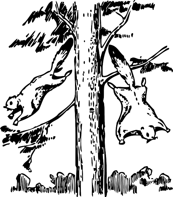 animals, outline, tree, cartoon, flying, squirrel