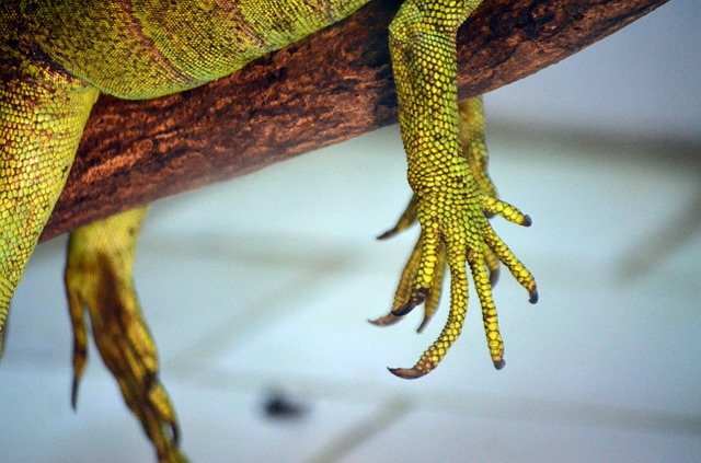 animals, reptile, claw, hand, lizard, scales, scaly