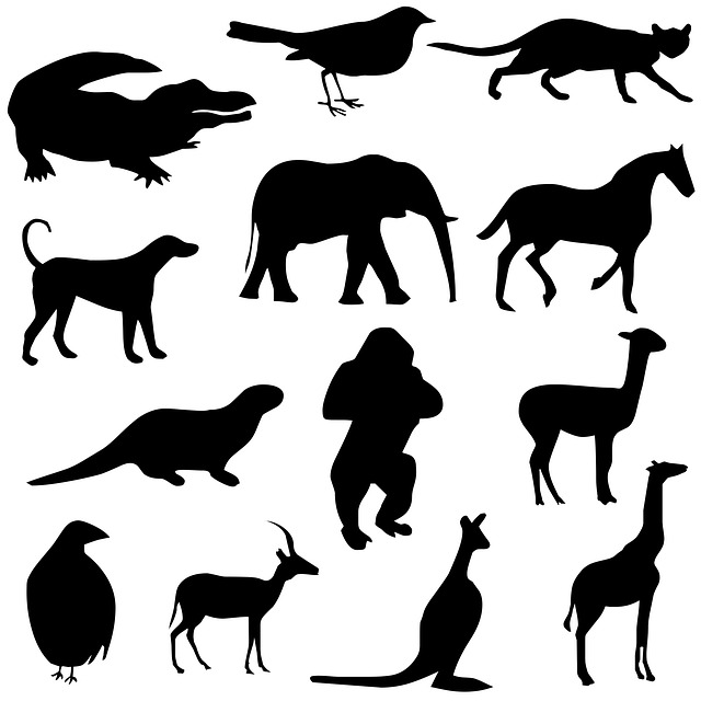 animals, silhouettes, drawing, alligator, bird, cat