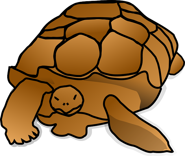 animals, turtle, large, cartoon, shell, reptile