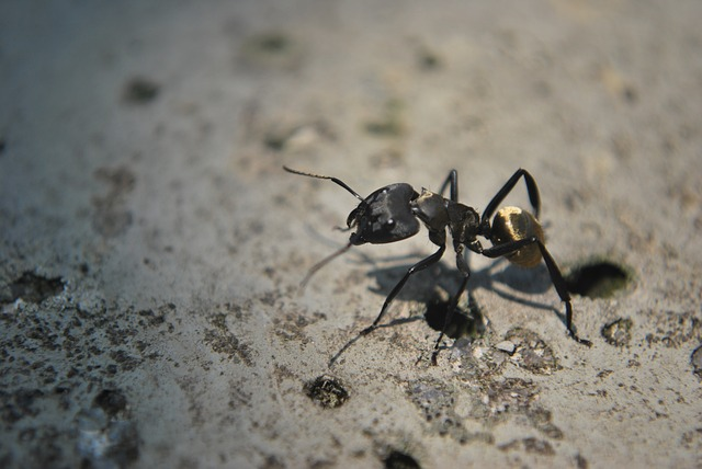ant, animal, insect, animals, nature, ants
