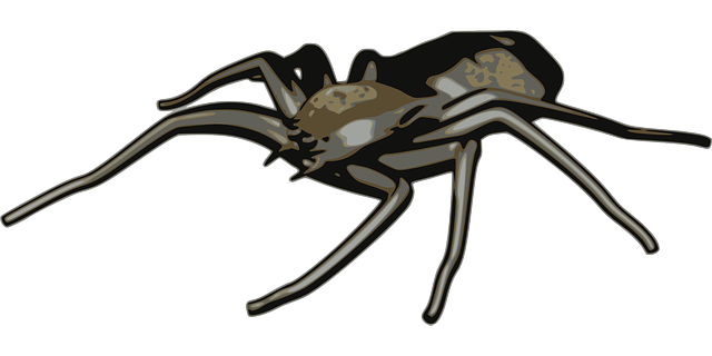 arachnid, spider, animal, black, arachnophobia