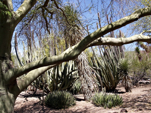 arizona, desert, cactus, plants, trees, nature
