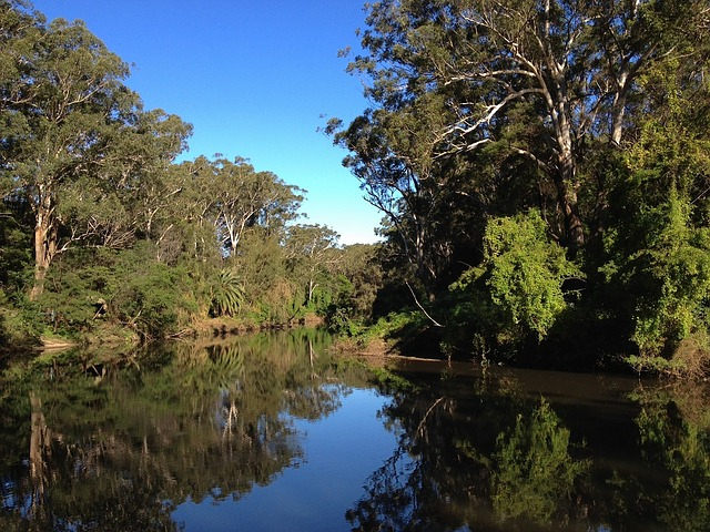 australia, forest, trees, woods, stream, water