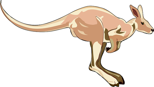 australia, kangaroo, long, hop, jumping, animal, tail