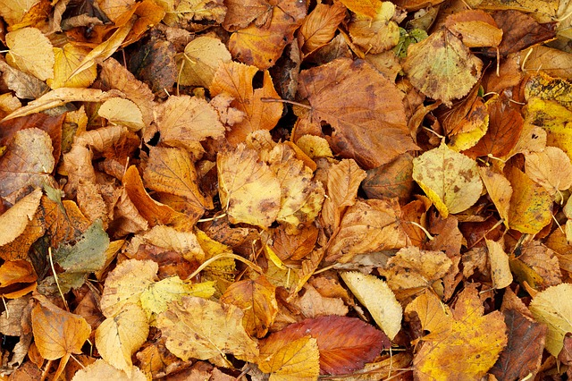 autumn, backdrop, background, bright, brown, bunch, dry