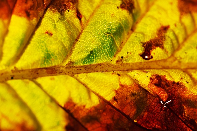 autumn, background, closeup, color, colorful, detail