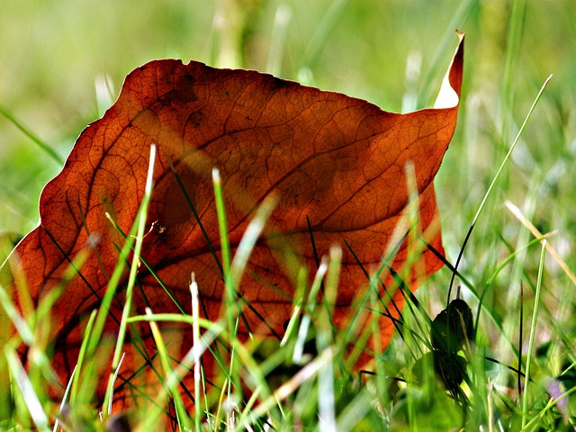 autumn, fall, leave, red, grass, nature, meadow