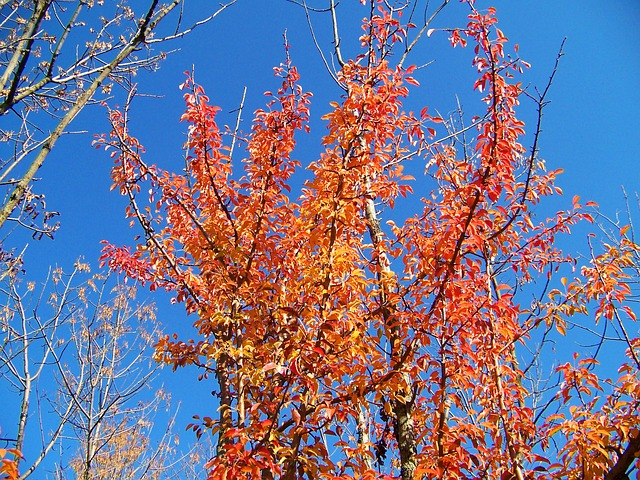 autumn, fall, leaves, trees, orange, blue, sky