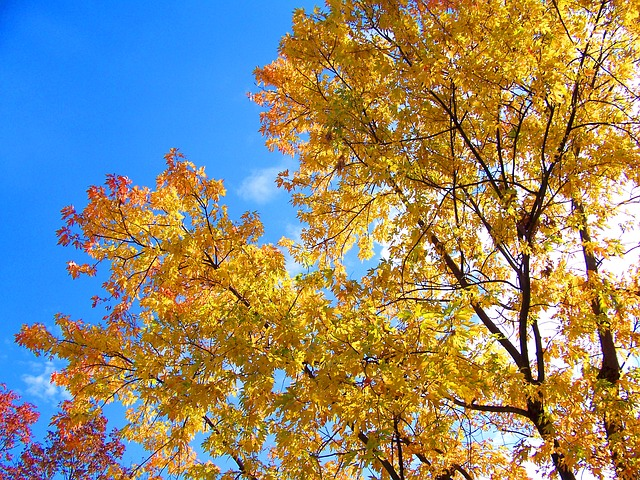 autumn, fall, leaves, trees, yellow, blue, sky