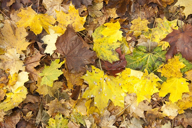 autumn, garden, nature, leaves, november, in the free