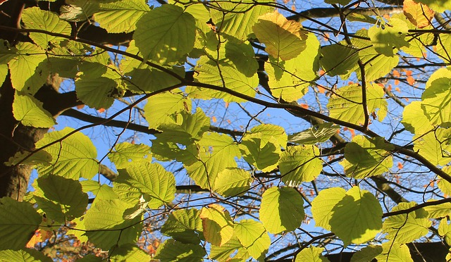 autumn, leaves, green, fall color, fall foliage, nature