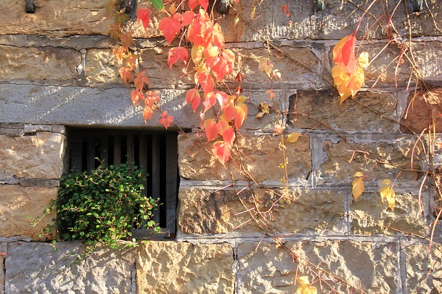 autumn, leaves, window, plant