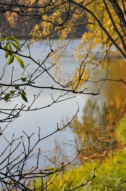 autumn, list, lake, branches, las, reflection, nature
