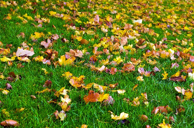 autumn, season, leaves, color, grass, background
